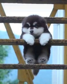 Cute Baby Dogs, Baby Animals Super Cute, Cute Little Animals, Cute Dogs And Puppies, Huskies Puppies, Baby Puppies, Cute Animal Memes, Cute Funny Animals, Cute Cats