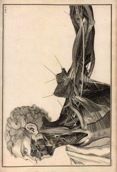 Faustino Anderloni, 1813
