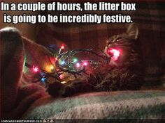 OR in a few seconds the kitty is going to be fried in 3....2....1.....ZAP!