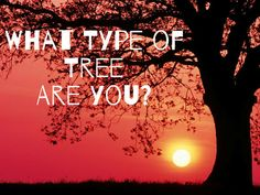 What Type of Tree Best Describes Your Real Personality?