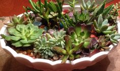 Succulents with polished rocks in Grandmother!s fruit bowl