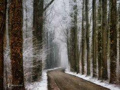 Winter in Velhorst by Lars van de Goor