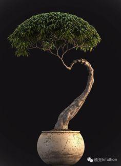 Bonsai… 盆景pén jǐng