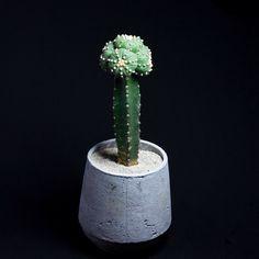 """matsudakouta: """"赤花瑠璃兜#cactus #サボテン#succulent """""""