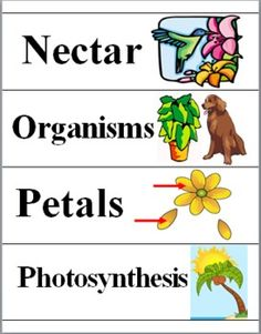 Plants Science Word Wall Cards