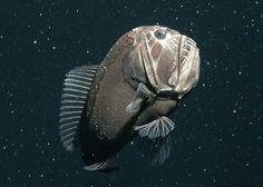 Weird Fish, Underwater Sea, Deep Sea Creatures, Deep Sea Fishing, Fishing Humor, Ocean Life, Marine Life, Under The Sea, Pet Portraits