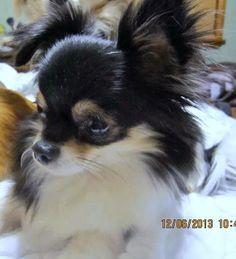 Our bad boy...Gizmo