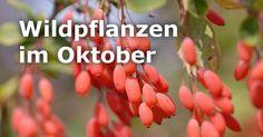 Schmackhaftes aus Feld und Flur: Wildpflanzen im Oktober