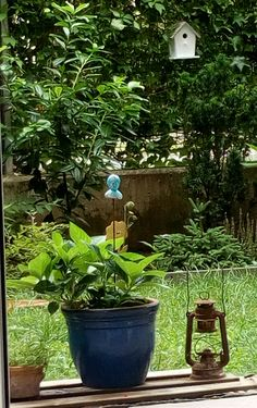 My shabby garden