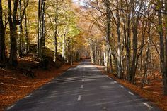 This picture is in Public Domain. Road by AntonioQuesada M