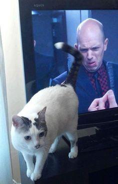 21 bilder på katter tagna i rätt ögonblick – Hemmets Journal