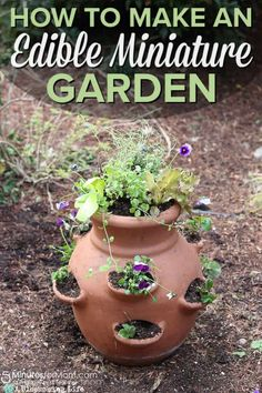 Have you ever made an edible miniature garden? See how to make a miniature garden that is perfect for a Mother's Day gift. Organic Gardening, Gardening Tips, Balcony Gardening, Gardening Quotes, Organic Plants, Vegetable Gardening, Pot Jardin, Gardening Magazines, Garden Steps