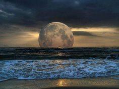 Pure Nature ..../ Bioluminescence Tide