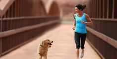 Apartment + Full time job? Learn how to exercise your dog to keep him healthy and happy.