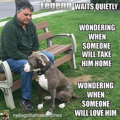 @Regrann from @nydogsthatneedhomes -  LEGEND WAITS QUIETLY WONDERING WHEN SOMEONE WILL TAKE HIM HOME WONDERING WHEN SOMEONE WILL LOVE HIM Legend is a 4 year old big boy with a heart of gold and an amazing capacity to closely bond with his human who was found as a stray on someone's door step. We thought Legend was so unique looking we decided to have him DNA tested to find out what breed he is --- it turns out he is an American Bulldog / Boxer mix! He's a big boy with extra long legs and a…