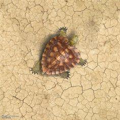 Turtle heart  #natureheart #love