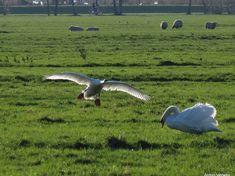 De landing (2) ... http://godisindestilte.blogspot.nl/2018/01/de-landing-2.html