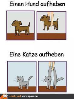 Best funny memes humor lol so true ideas Funny Cute, Funny Shit, Hilarious, Facebook Humor, Cute Comics, Funny Comics, Up Dog, Dog Cat, Animal Memes