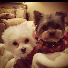 The lil white puppy reminds me so much of my baby Brooklyn when he gets his hair cut=0)