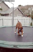 Happy boxer puppy on a trampoline, I so want to jump with him! This made my day. MUST WATCH. SO CUTE!!!!!