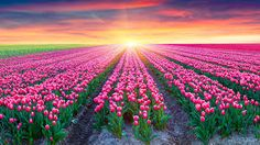 Image result for colourful flowers hd pictures