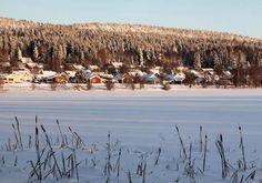 Massettes à larges feuilles, en Suède, par Siv Domeij / Communauté GEORetrouvez d'autres photos de ce membre