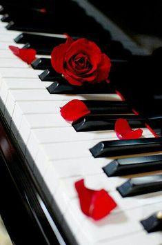 piano love I want to play piano again. when I was a child i used to play piano every day.