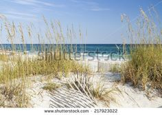 stock-photo-dune-fence-and-sea-oats-on-the-dunes-at-pensacola-beach-florida-on-gulf-islands-national-seashore-217923022.jpg 450×320 pixels