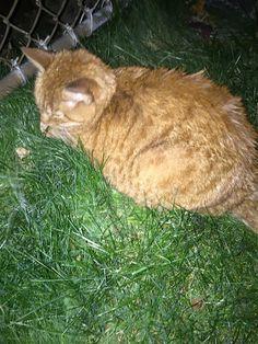 Found Cat - Tabby - Toronto, ON, Canada M9L 1L3 on November 19, 2015 (13:00 PM)