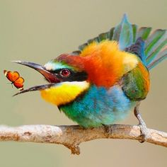 cool-bird-and-butterfly