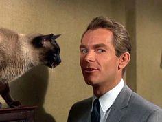 Un'immagine dell'attore Dean Jones con il quattrozampe protagonista di FBI Operazione Gatto, film del 1965 girato dalla Walt Disney.