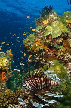 Such a beautiful experience swimming with all the sea creatures along the great barrier reef, Queensland, Australia Beneath The Sea, Under The Sea, Great Barrier Reef Australia, Vida Animal, Photo Animaliere, Underwater Life, Ocean Creatures, Sea And Ocean, Sea World
