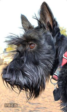Terriers PiperMacKenzie from Ontario, Canada - Scottish Terrier Art. Terrier Dogs, Pitbull Terrier, Bull Terriers, Dog Portraits, Westies, Little Dogs, Dog Art, Dogs And Puppies, Doggies