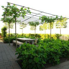 In de zomer bieden de dakplantanen boven het terras een prettige schaduw.