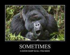 You've Got To Move It, Move It - Funny Animal Memes and GIFs that are pure comedy gold. Funny Animal Memes, Funny Animal Pictures, Funny Animals, Hilarious Pictures, Animal Pics, Planet Of The Apes, Nature Animals, Adult Humor, Lol