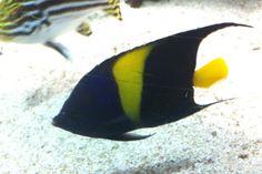 24 Blue Reef Aquarium