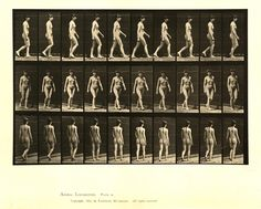 Animal Locomotion | Eadweard Muybridge