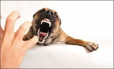 Aggressive behavior is something no one of us would want to see in our dogs. Behaviors like excessive growling