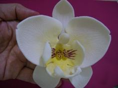 Of Wedding Cakes, Sweets and more...in Ipoh, Perak.: Gum Paste Moth Orchid Tutorial