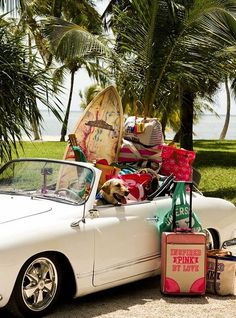 Hawaii. Puppy. Cute luggage. Comfortable. Yup, my day dreams take me there.