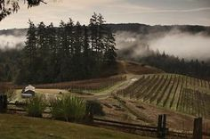 Super cool article about Sonoma Coast Syrah - we definitely agree. #Syrah