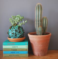 Offer a plant to a friend... – Pod