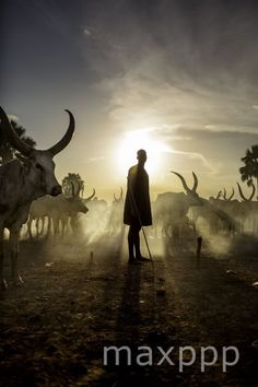 ©Casper Hedberg/ZUMAPRESS /MAXPPP - May 8, 2013 - Yirol, South Sudan - Evening activities in a cattle camp close to Yirol. Soudan #photo #photos #pic #pics #picture #pictures #snapshot #art #beautiful #instagood #picoftheday #photooftheday #color #exposure #composition #focus #capture #moment