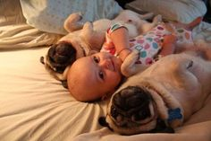 probably nothing cuter on this earth than pugs and babies