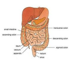 Herbal Remedies For Digestive Problems