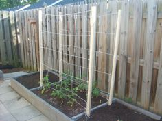 Tomato Stakes and Netting