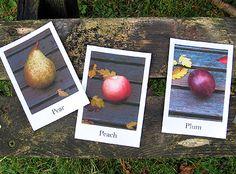 Fruit & Veggie Flashcards: apple, banana, lemon, mango, pear, peach, plum, avocado, broccoli, cabbage, carrot, chillies, courgette, cucumber, garlic, green beans, leek, pumpkin, red onion, sweet potato, tomato, turnip plus extra plural cards- apples & tomatoes.