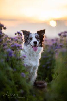 Dráček a svazenka Dog Photography, Dog Pictures, Corgi, Animals, Corgis, Animales, Animaux, Animal, Animais