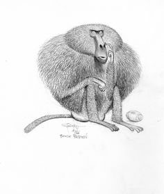 "Carter Goodrich, Baboon from ""Animal Crackers. Character Design Animation, Character Design References, Character Art, Animal Sketches, Animal Drawings, Monkey Illustration, Illustration Children, Animal Crackers, Character Design Inspiration"