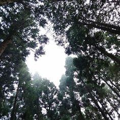 森の中からおはようございます